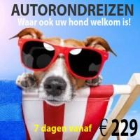 130922239-hond-zonnen-op-een-ligstoeledited